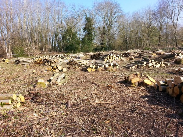 Recent coppice in Perry Wood